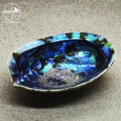 Abalone-Muschel, groß