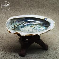 Abalone-Muschel, klein
