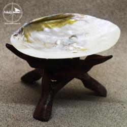 Perlen-Muschel